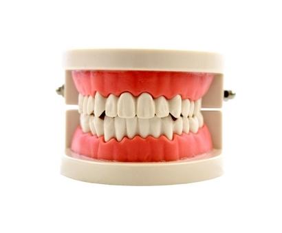 Este material, es un modelo de una dentadura humana, y tiene la finalidad de mostrar al niño como cepillarse los dientes,vista frontal,fotos redes sociales,mmm048