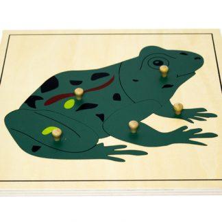 Puzzle de la Rana - Material Montessori-vista frontal