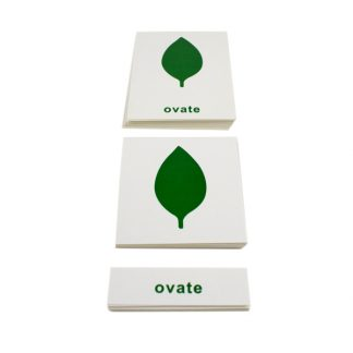 Tarjetas del Gabinete de Botánica - Material Montessori- vista frontal