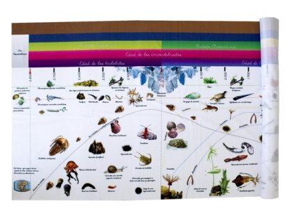 Linea de la vida - Material Montessori MMM232